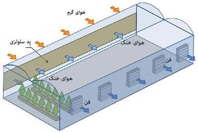 پد سلولزی چگونه باعث خنک شدن گلخانه می شود